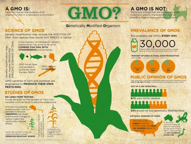 GMO - Biến đổi gen sẽ ảnh hưởng đến tinh bột và bột biến tính